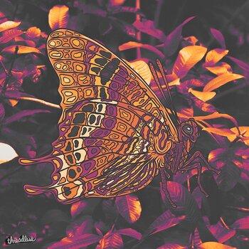 Butterfly Fire Dream
