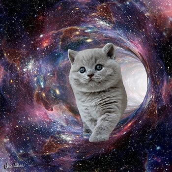 Galaxy Cat and Wormhole