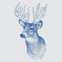 Wildlife: Antlers - small view