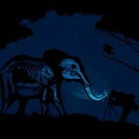 Elephants Don't Like Flash - small view