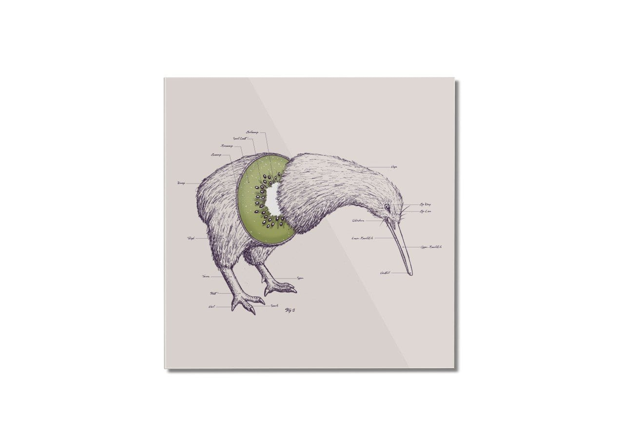 Kiwi Anatomy by William McDonald | Square Mounted Acrylic Print ...