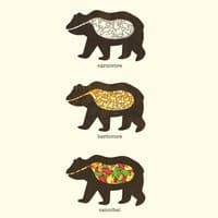 The Eating Habits of Bears - small view