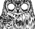 Owltical Illusion - small view