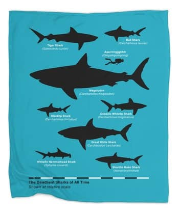 The Deadliest Sharks of All Time