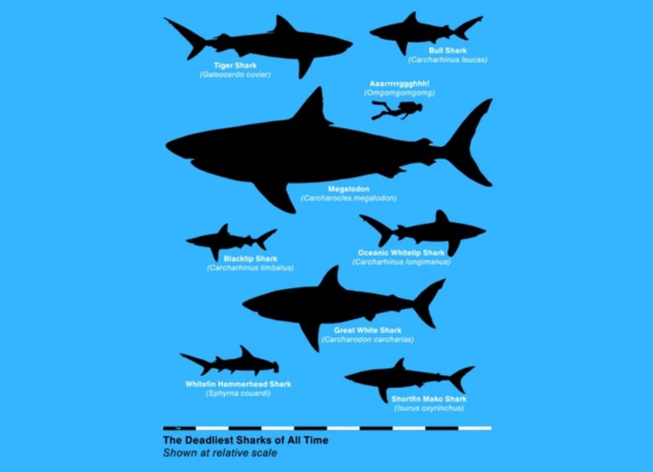 the deadliest sharks of all time by aled lewis threadless the deadliest sharks of all time small view