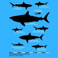 The Deadliest Sharks of All Time - small view