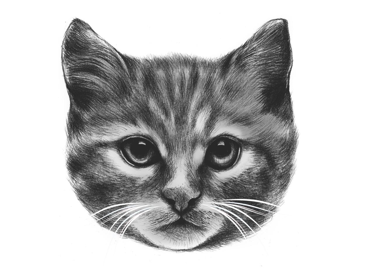 everybody wants to be a cat by dan elijah fajardo threadless