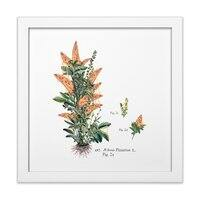 Vegetabilis Pizzarius - white-square-framed-print - small view