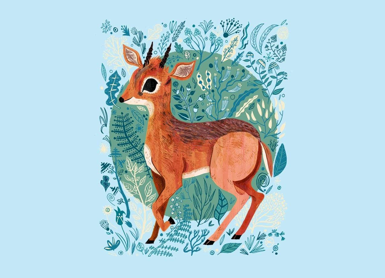 Dik Dik By Meg Hunt