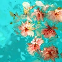 Pool of Blossom - small view