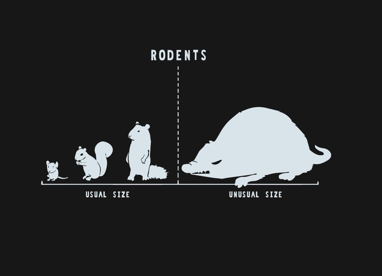 Rodents By Size By Nathan Pyle